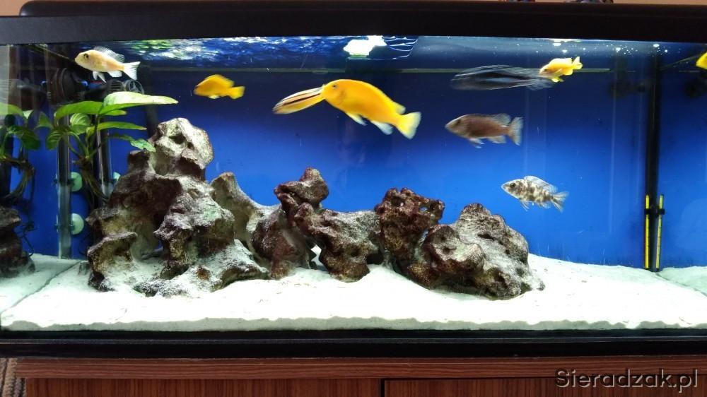 Rybki Lub Akwarium Z Rybkami Malawi Sieradzakpl